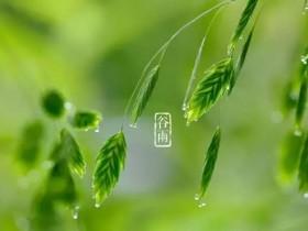 今日谷雨,谷雨节气知识收藏