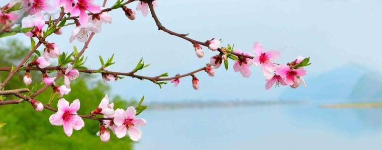 四月份少先队环保主题教育月活动方案