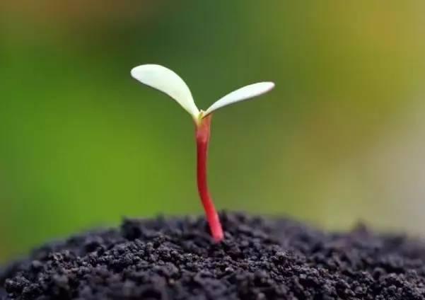 守住内心的那颗种子——写给即将离开少先队岗位的同行们
